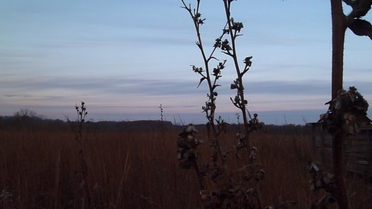 Compass Plant Remains and Sky