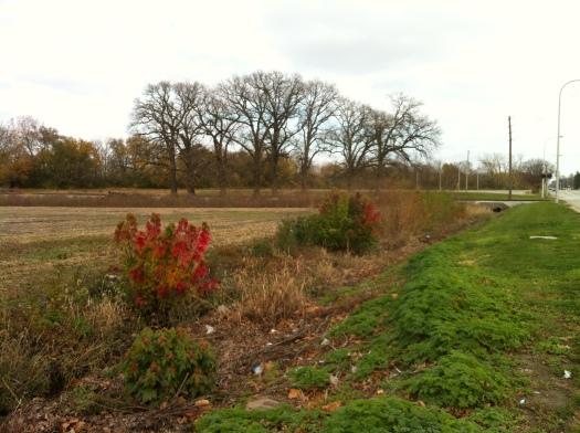 E Main Bare Oaks, Remaining Color