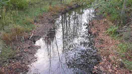 Stumps but No Beavers