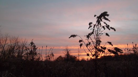 Sunrise with Old Goldenrod Closeup