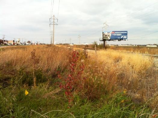 US 45 RR Prairie in Gold