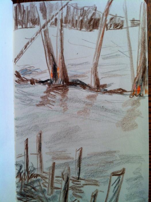 Beaver Work and Chewed Alders 31 Dec 12