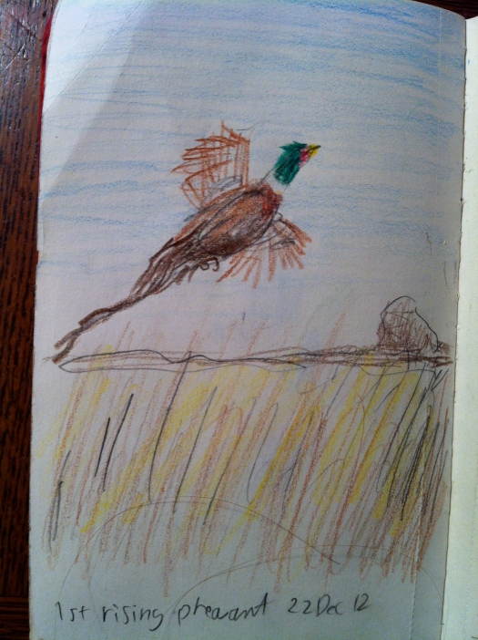 Flushing Pheasant 22 Dec 12