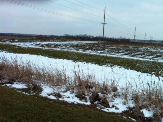 Winter Cattails along Lincoln Near Windsor
