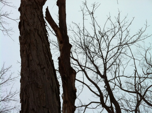 Large, Medium, Small Tree Trunks