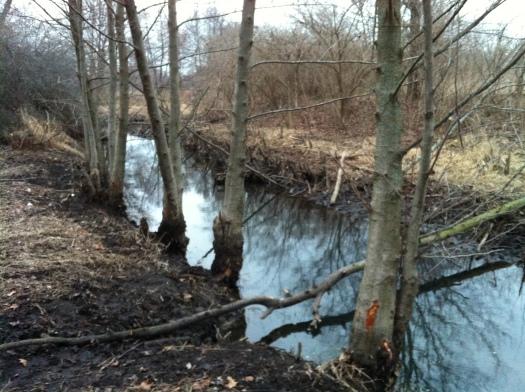 Chewed Alder Site 10 Mar 13