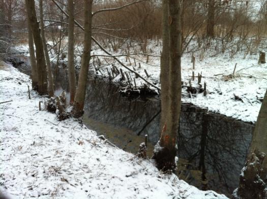 Chewed Alder Site 24 Mar 13