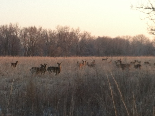 February Herd of Deer