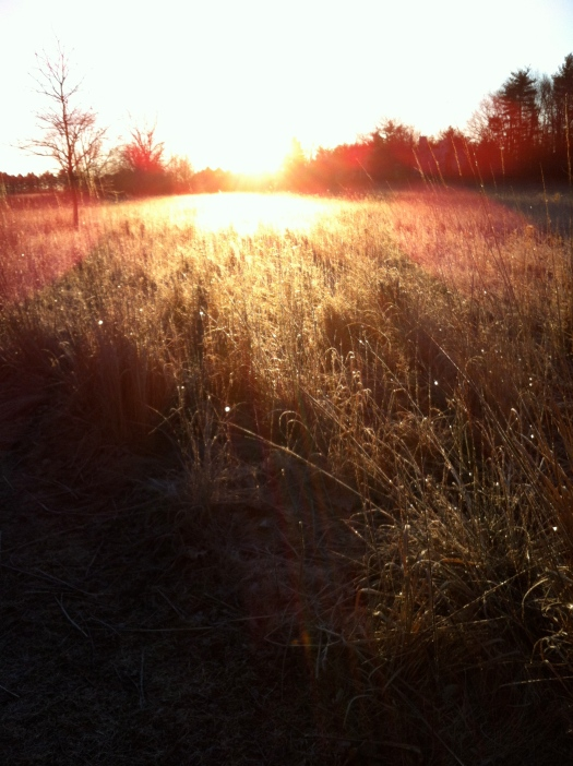 First Morning Sunlight Dispersed by Frost