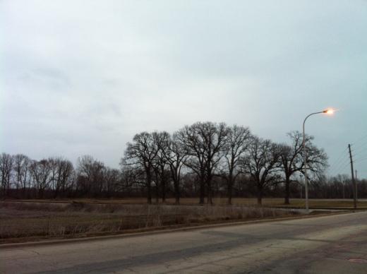 Oaks Across from Dart