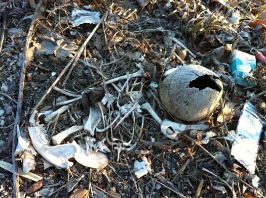 Possum Bones 3 Mar 13 1