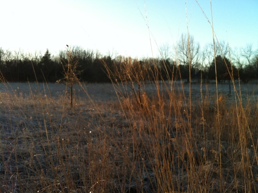 RWBB in Little Treetop and Sparking fFrost