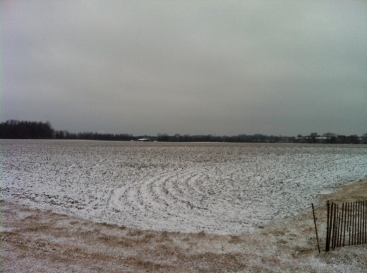 Snowy Field, Cloudy Morning