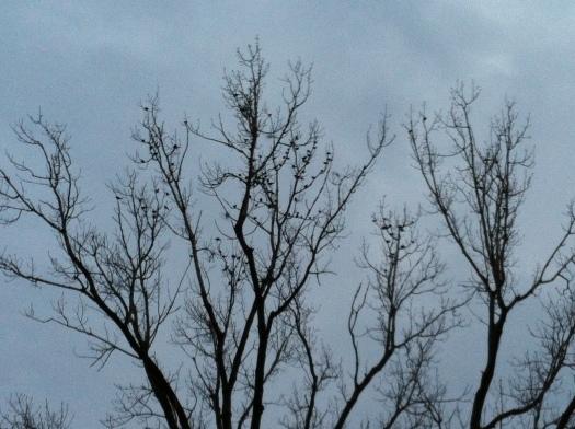 Treetop w:Lots of RWBBs