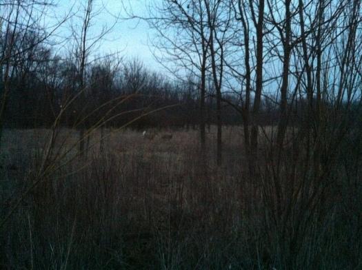 Two Deer 10 Mar 13