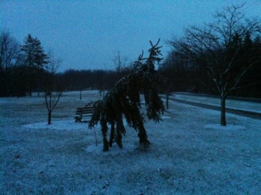 Wonky, Creeping Christmas Tree