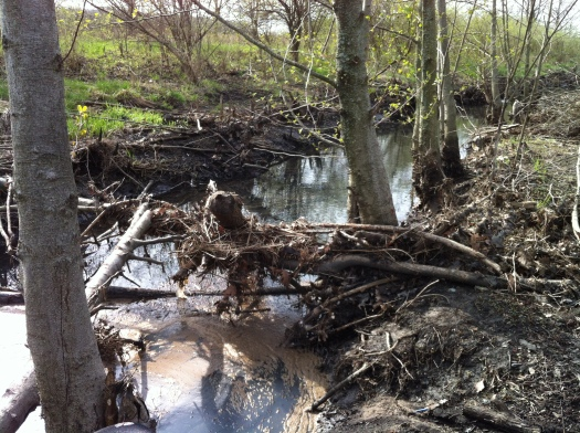 Flotsam on Beaver Log with Green