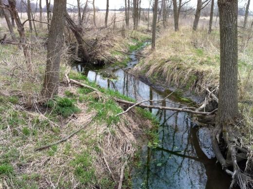 Getting Green, McCullough:Davis Creeks