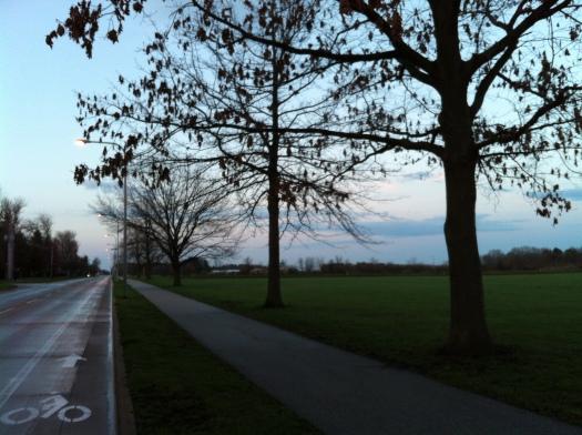 Late-Clinging Oak Leaves 14 Apr 13