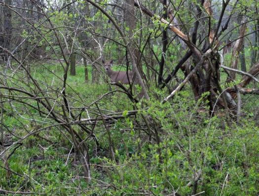 Unconcerned Close Deer