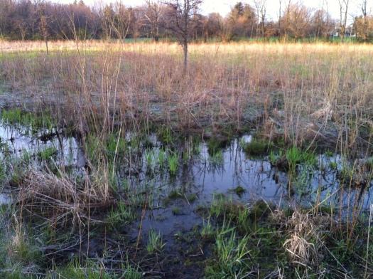 Wet Land 21 Apr 13