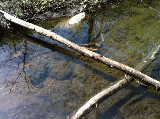 Deer Bones and Rocks with Eggs in Creek