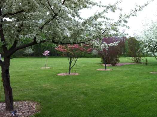 Little Flowering Trees and Lawn