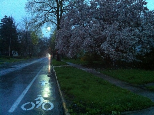 Magnolias in Early Rain, Washington St
