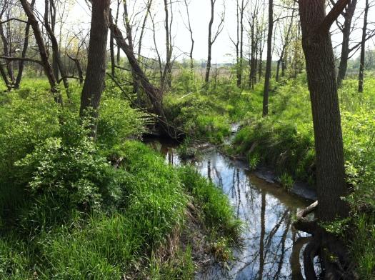 Rising Green, Davis:McCullough Creeks