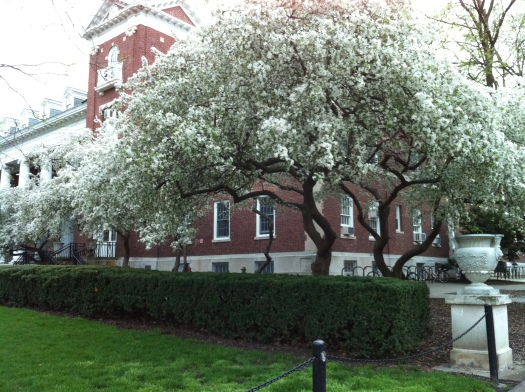 W Inside of Quad w:Gorgeous Trees in Flower