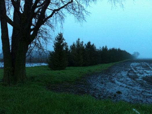 Wet Fields w:Tractor Tracks