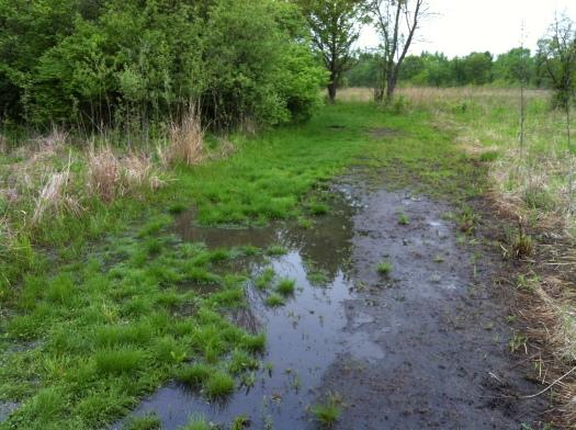 Wet Soft Path