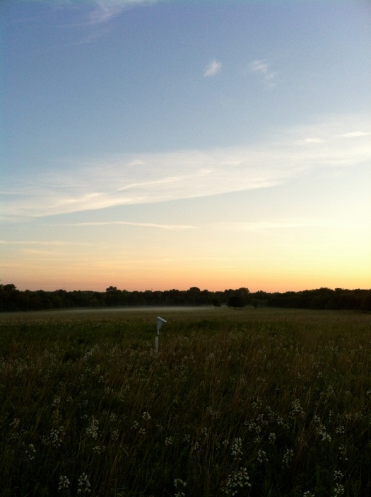Nestbox, Penstemon, Mostly Clear Sunrise Sky