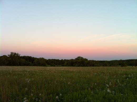 Wide View Prairie w: Waning Penstemon and Western Sunrise Sky
