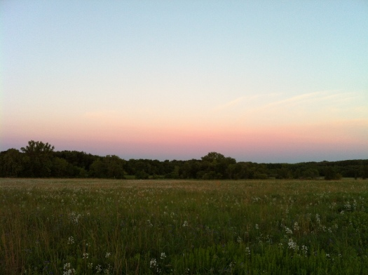 Wide View Prairie w: Waning Penstemon and Western Sunrise Sky