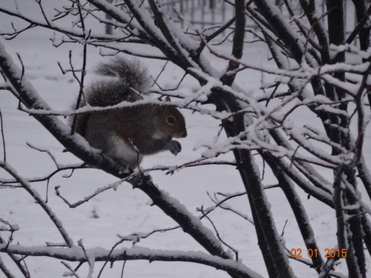 Carle Squirrel Close 1 Feb 15
